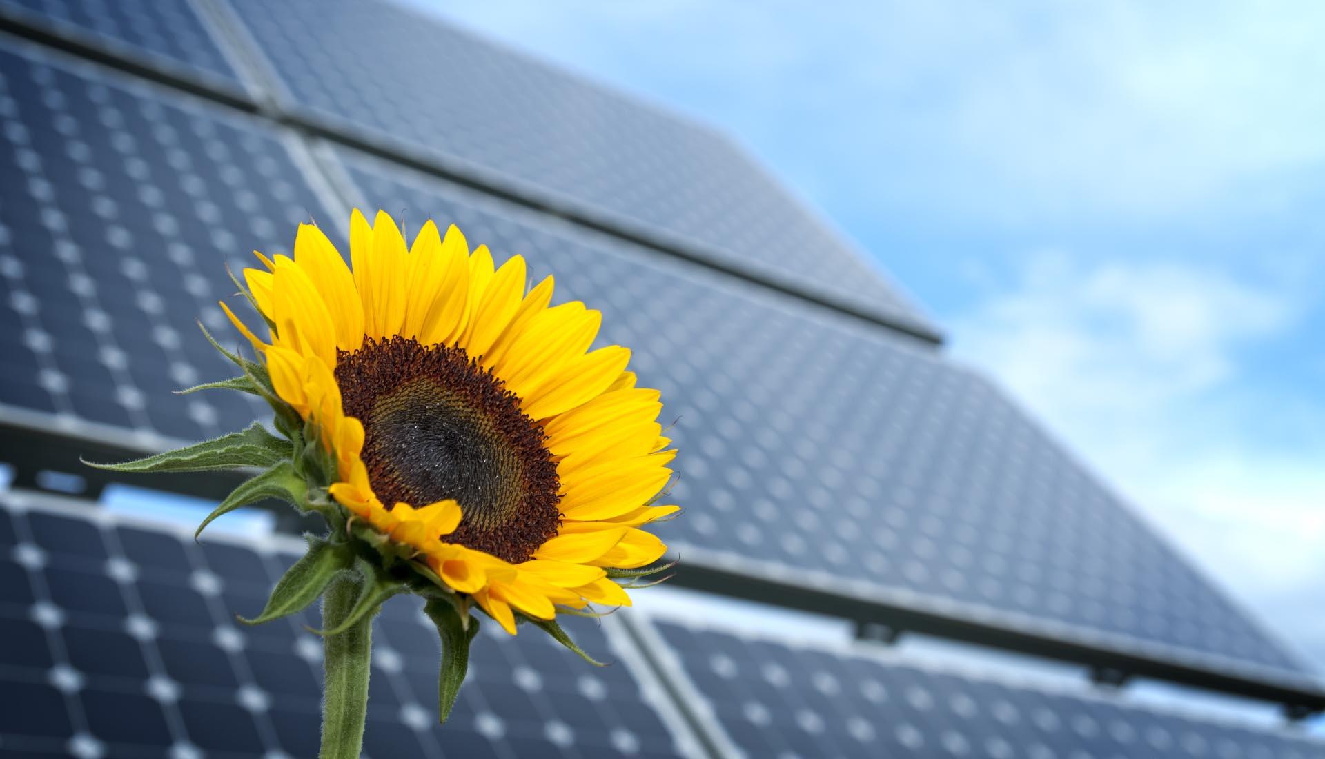 Solar Solutions TERRAVIS